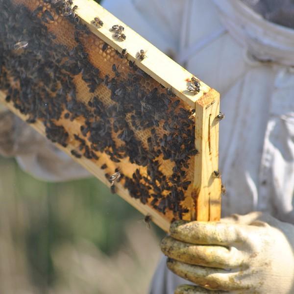 Miel y Alimentos Ecológicos  ▷ Alemany Online