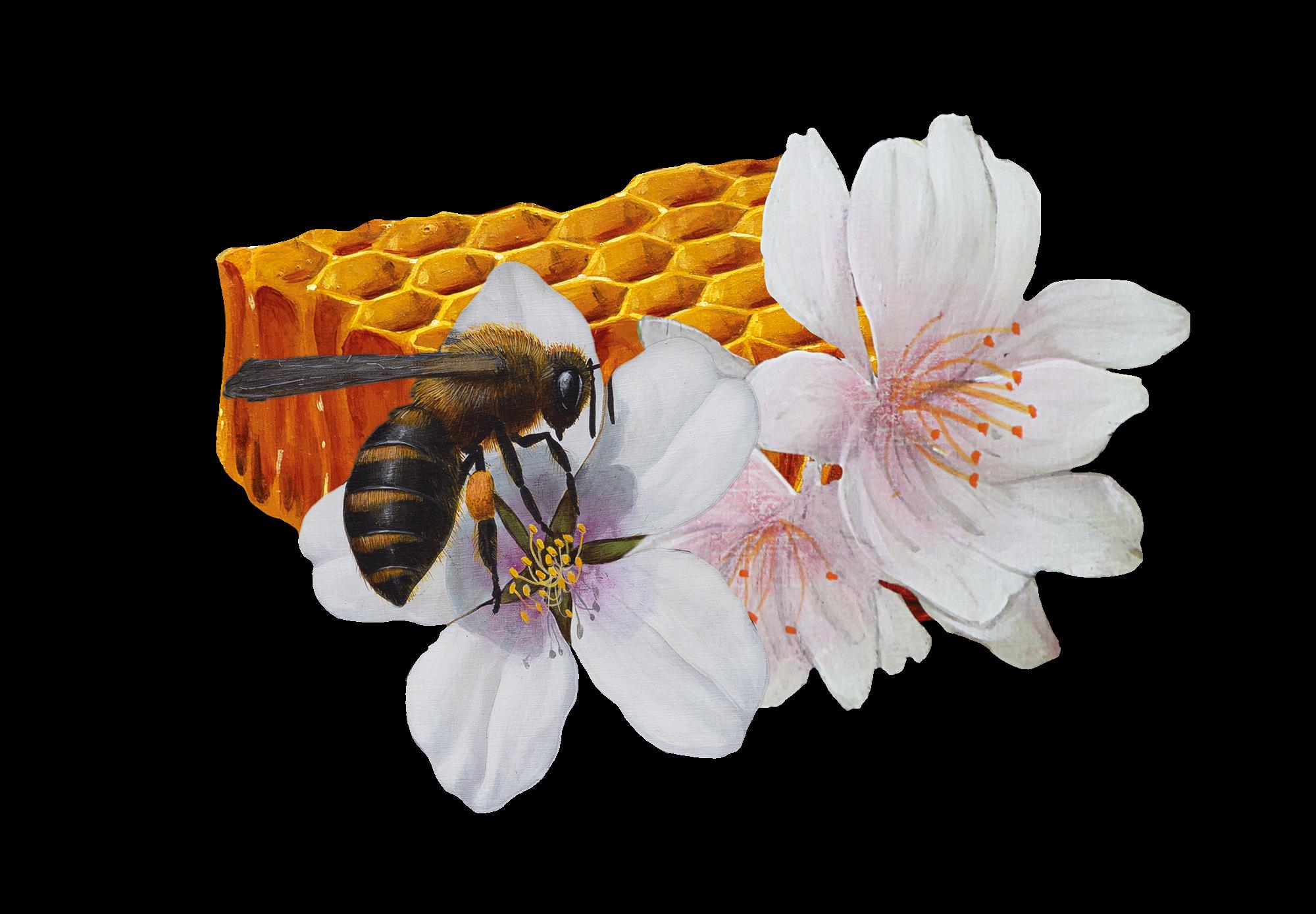 Miel con polen, jalea real y propóleo Alemany 250g