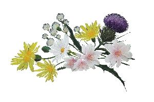 Mel ecològica de flors Alemany 500g
