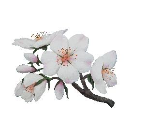 Flor Ametller | Mel Flor Ametller Alemany 250g