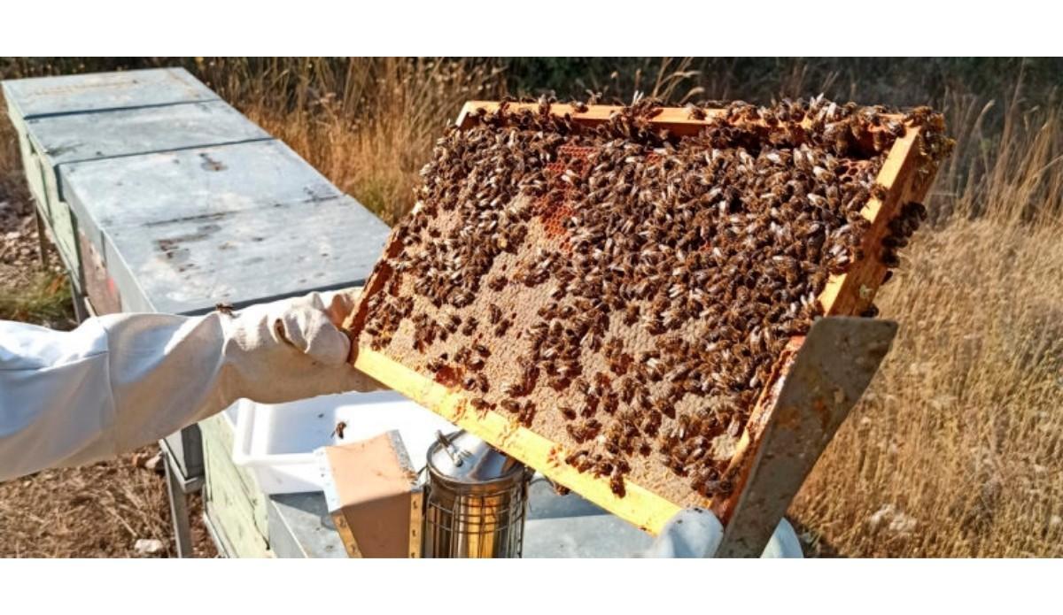 Por la salud de las abejas